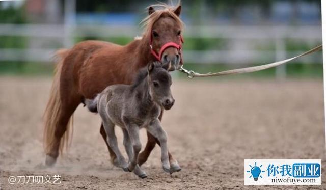 相比养马,于谦说相声可能都得算他的副业